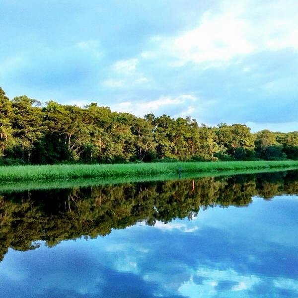 Trees reflecting in water at Waccamaw River