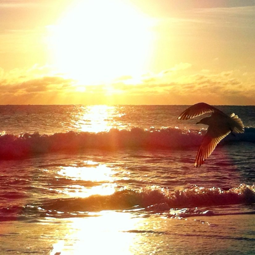 seagull flying over waves at sunrise