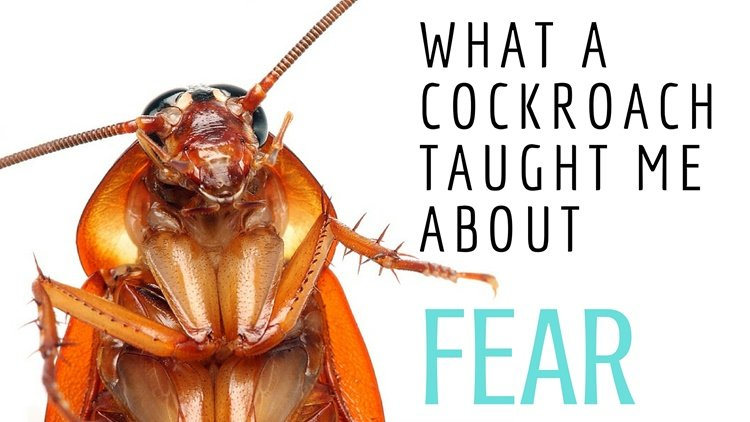 What a Cockroach Taught Me About Fear