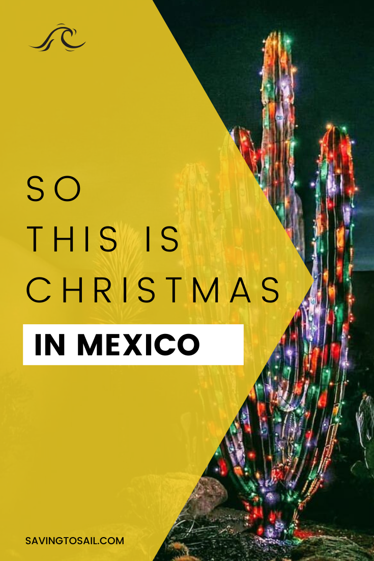 So this is Christmas in Mexico. Cacti and colored lights.